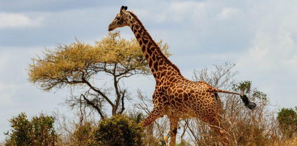 Kenya : comment réussir son séjour touristique ?